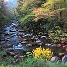 SPRING,W.PRONG LITTLE PIGEON RIVER by Chuck Wickham