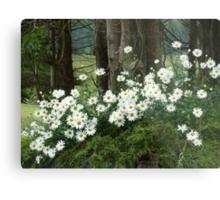 Sheltering daisies. Metal Print