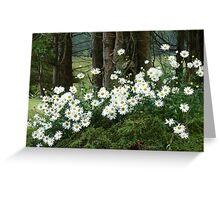 Sheltering daisies. Greeting Card