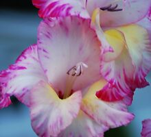 Gladiola II by WarrenMangione