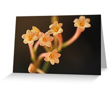 Pretty Pale Flower Greeting Card