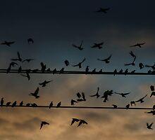 Single File, Not all in flight by Daniel  Oyvetsky