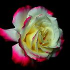 REMEMBER ROSE by RoseMarie747