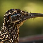 Roadrunner Profile by Chris Morrison