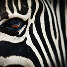 Zebra. by mumblebug