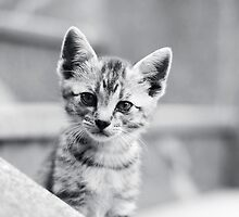 Cute Kitten by Matic Golob