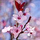 All Spring And Pinkly by Shaun Colin Bell