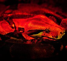 Red Boa by mumblebug