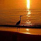 Maldives: Heron at sunset by presbi