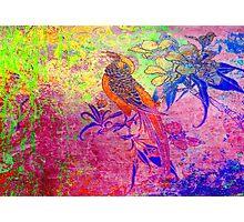 Happy Bird.Colours. Photographic Print