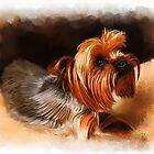 Cute pet dog portrait by Michael Greenaway