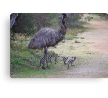 Dad taking the chicks for a walk Canvas Print