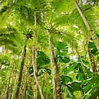 Palm Forest, Girringun National Park by Dieter Tracey