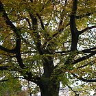 City Park Tree by bevy111