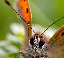 Small Copper - Large by chemival