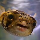 Pugsley the Puffer Fish by Megan Schatzman