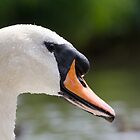 Soggy Swan by stay-focussed