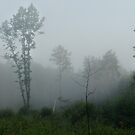 Fog symphony in forest (oak tree) by Antanas