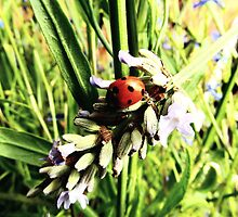 Oh! To be a ladybird... by Tibbs