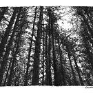 Dark forest by Dasidaria Hardcastle