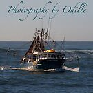 Tweed Trawlers by Odille Esmonde-Morgan
