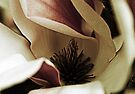 Magnolia's Heart by Evita