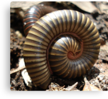 MILLIPEDES Canvas Print