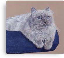 Bayou - A Portrait of a Himalayan Cat Canvas Print
