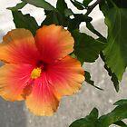 Orange Flower by camerawoman1