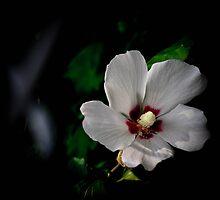 In the Dark.... by Farah  Rose