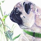Pug & Nature - Colored Pencil by Patricia Barmatz