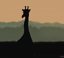 African Sunset_Giraffe by SophiaDeLuna