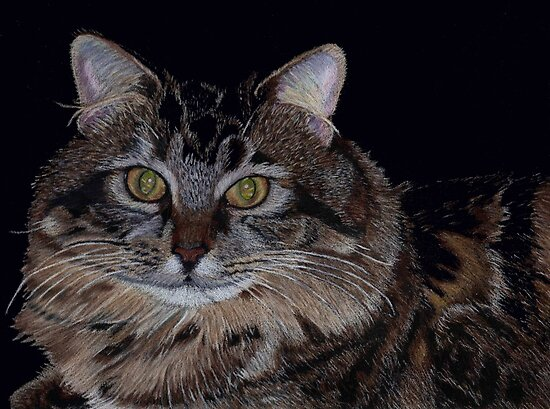 Little Girl - Maine Coon Colored Pencil Painting by Patricia Barmatz