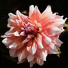 Peachy by Ray Clarke