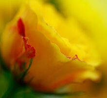 Color Me Yellow by Brenda Burnett