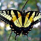 Butterfly Spread by Rick McFadden
