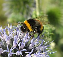 Busy Bee by Dorothy Thomson