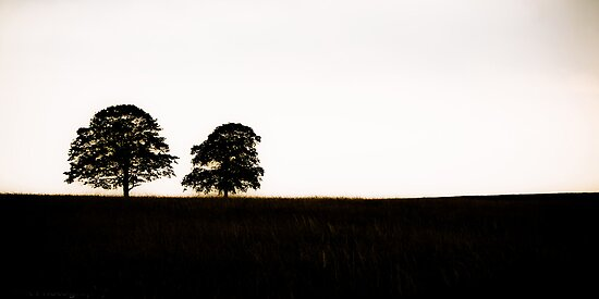 Silhouetted  by riotphoto