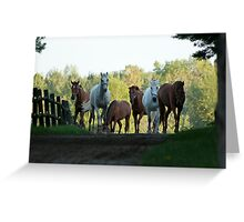 Even Horses Don't Have Great Mornings Greeting Card