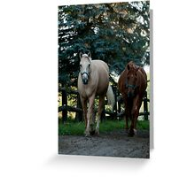 Strolling In  (Fitzroy and Nelson) Ottawa, ON Greeting Card