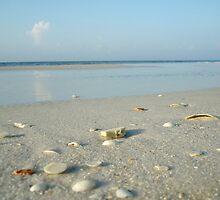 Sea Shells by Kathy Bucari