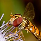 Hover fly on a lilac flower by Richard Majlinder