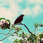 Bird by creativebubble