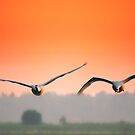 In flight in the morning by THHoang
