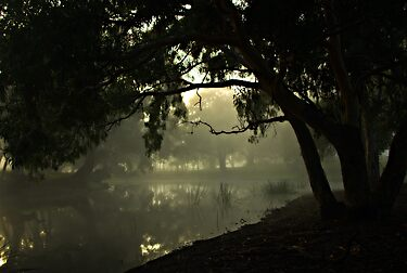 Misty Morning by Kerry  Hill