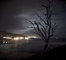 The tree and the saucepan. by Dan Coyne