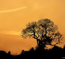 The Golden Hour (India) by AroonKalandy