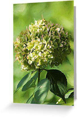 *Just Green Hydrangea* by DeeZ (D L Honeycutt)
