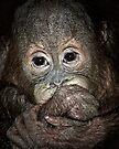Orang Utan Baby Portrait by Henry Jager