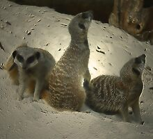 THE MEERKAT FAMILY by leonie7